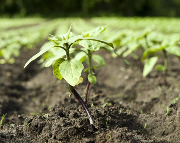 Možnosti dopolnitve osnutka programa Sklada za podnebne spremembe za l. 2020