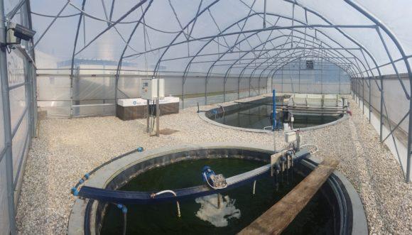 AlgaeBioGas: Algna tehnologija za čiščenje voda in pridelavo biomase