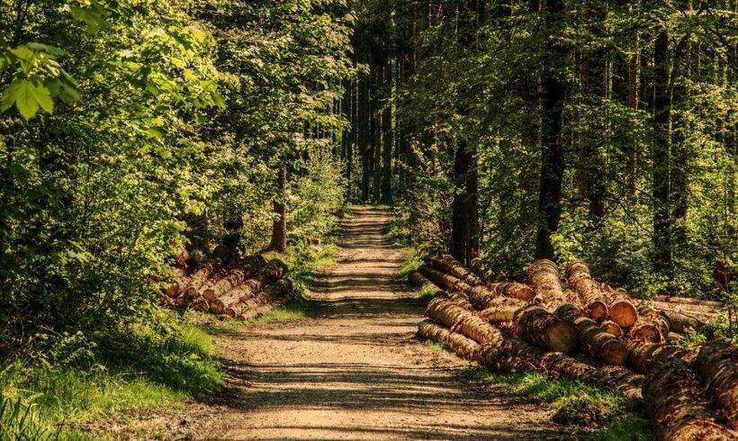 Vabilo na dogodek: »Potencial manj kakovostnega lesa v krožnem biogospodarstvu«